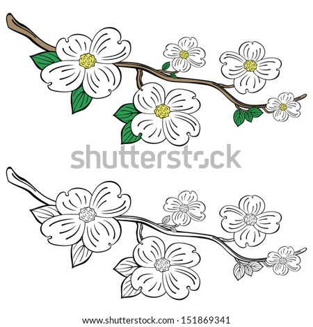 Dogwood Branch Coloring Pages