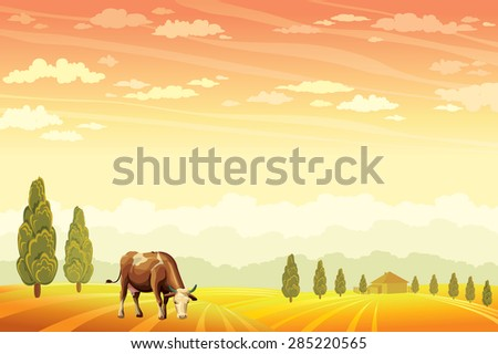 Domestic cow grazing on the field with the sunset cloudy sky background. Vector of rural summer landscape.  - stock vector