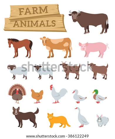 Domestic farm animals flat vector icons set. Colorful illustrations of large and small cattle, birds and pets. Farming  infographic elements. Cartoon educational clip art. Isolated on white - stock vector