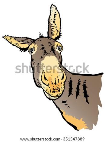 Donkey vector from photo. - stock vector