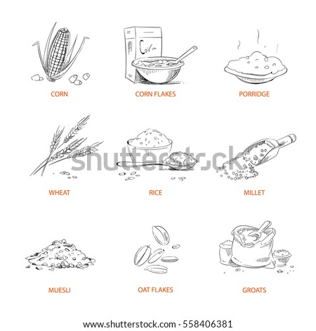 Doodle cereals groats, porridge, muesli, cornflakes, oat and rye, wheat and barley, millet or buckwheat, rice, corn vector. Set of cereals sketch. Vector illustration.
