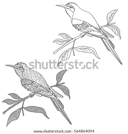 Doodle Coloring Book For Adult With Birds On The Branch