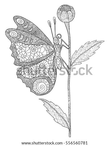 Doodle Coloring Book Flower Bud Butterfly Stock Vector 556560781 ...