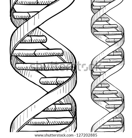 Doodle style DNA double helix seamless vector background or border. - stock vector