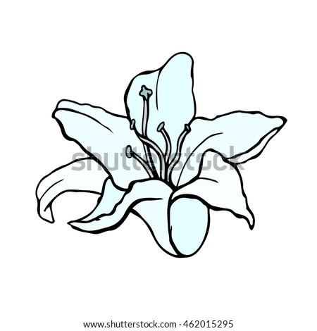lily bud outline sketch vector stock vector 177841019. Black Bedroom Furniture Sets. Home Design Ideas