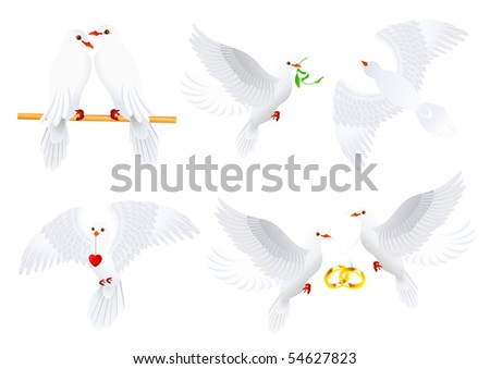 Dove collection, vector illustration - stock vector