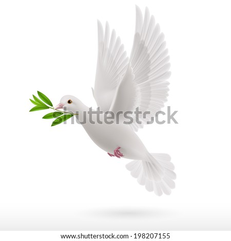 Dove of peace flying with a green twig in  beak on white background - stock vector