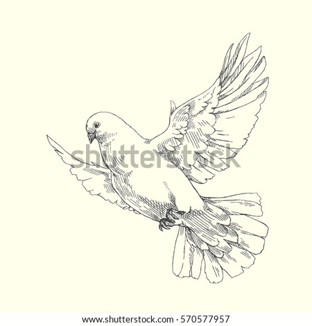 dove vector hand drawn illustration of flying pigeon isolated on white