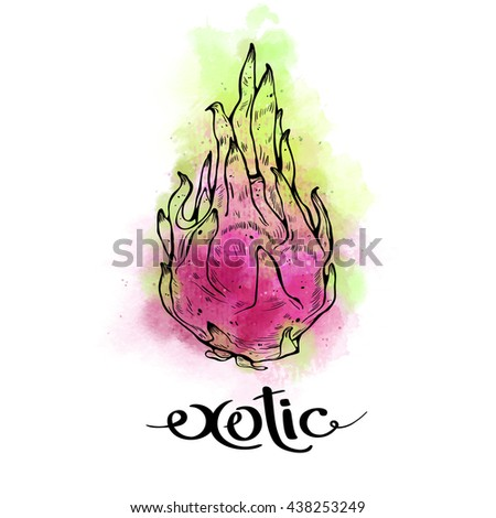 Dragon Fruit and exotic lettering on white background with watercolor stains. Print t-shirt, graphic element for your design. Vector illustration. - stock vector