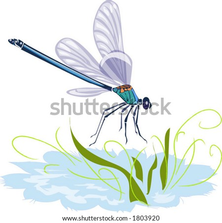 Dragonfly and Water Vector - stock vector