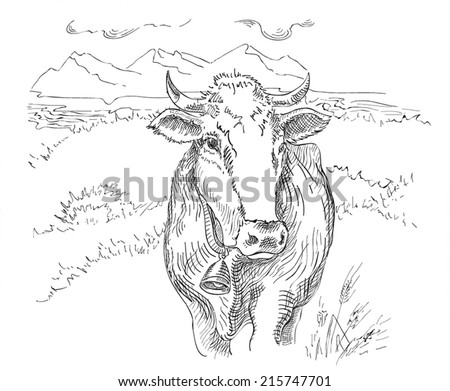 Drawing cow - stock vector