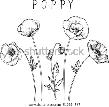 Drawing flowers poppy flower clipart illustration stock vector 2018 drawing flowers poppy flower clipart illustration stock vector 2018 513994567 shutterstock mightylinksfo Image collections