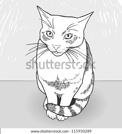 Drawing of a cat. Vector hand-drawn illustration of cute cat. - stock vector