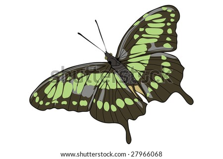 Drawing of a opened winged green butterfly