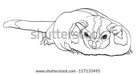 Drawing of cute Sugar Glider(Petaurus Breviceps) - stock vector