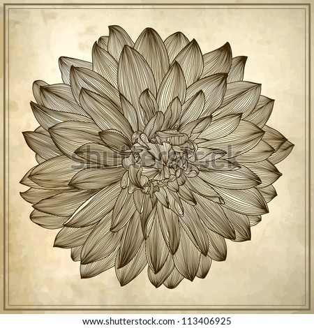 Dahlia Flowers Drawing Drawing of Dahlia Flower on