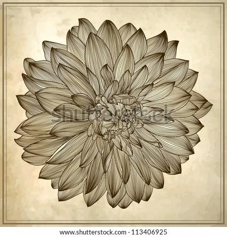 Dahlia Flowers Drawing Drawing of Dahlia Flower on