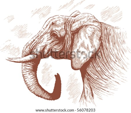 Drawing of Elephant. With vector, colour is on a separate layer, and can be moved or removed.
