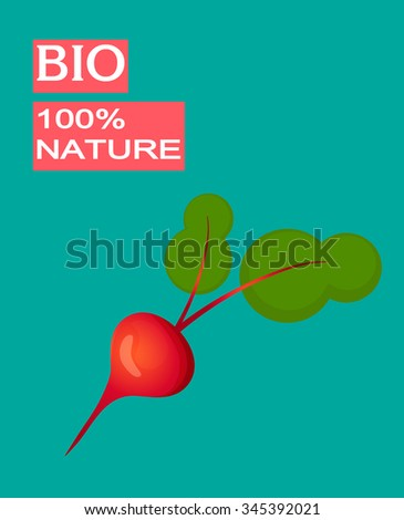 Drawing of fresh beetroot isolated on green background.Vector  vegetable illustration.  - stock vector