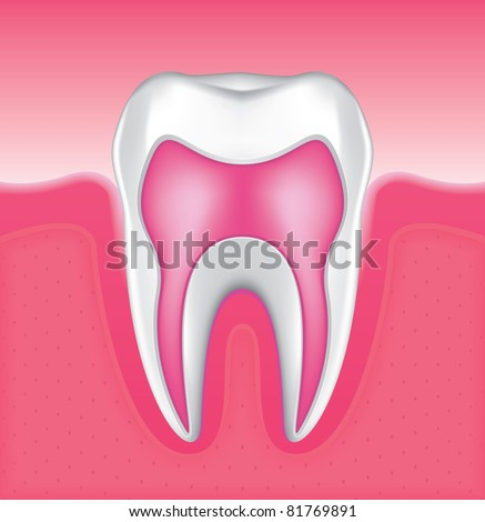 Drawing of the gums and tooth enamel - stock vector