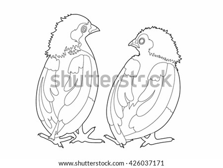 Drawing two birds conversation