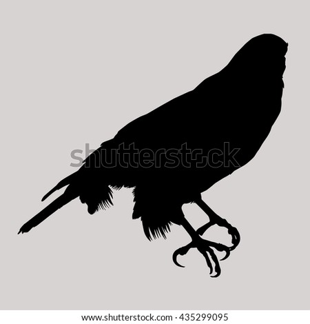 Drawing vector isolated Northern Goshawk - accipiter gentilis albidus silhouette