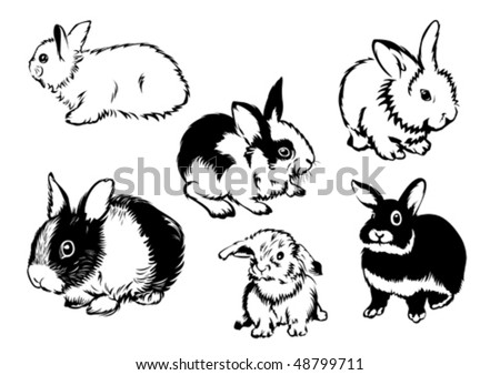 Drawings of rabbits in various poses - stock vector