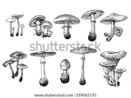 drawn mushroom drawing - stock vector