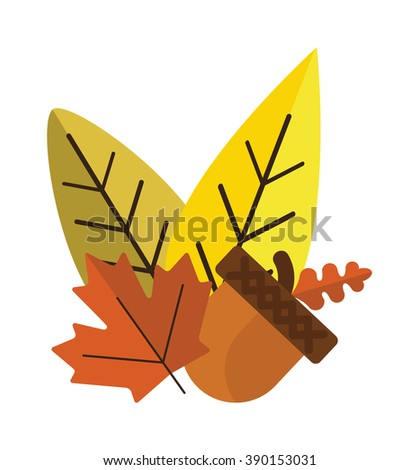Dried acorns with leaves flat vector illustration. Acorns oak isolated on white. Nature plant acorns and leaves. Acorns with leaves autumn decoration. - stock vector