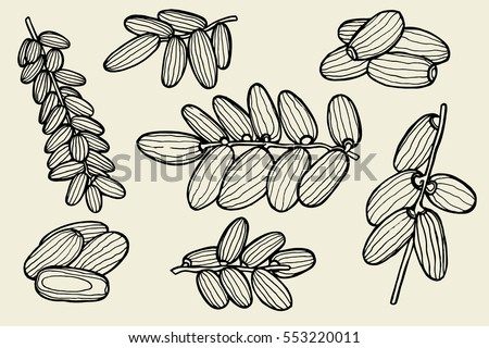 Dried Fruits Vector Illustration Of Dates