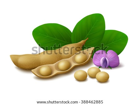 Seed-pods Stock Images, Royalty-Free Images & Vectors ...