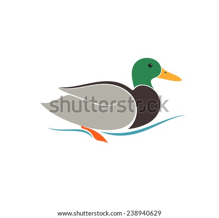 Duck. Isolated bird on white background. Vector illustration