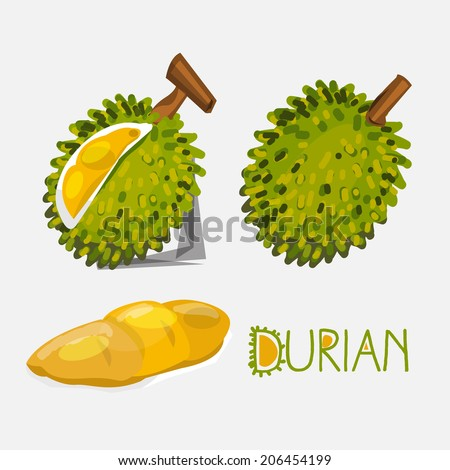 durian- vector illustration
