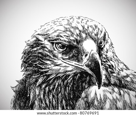 eagle head line art