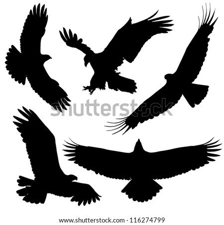Eagle Silhouette on white background - stock vector