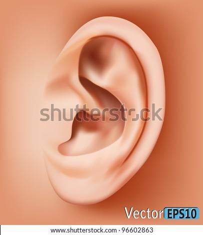 Ear closeup.vector - stock vector