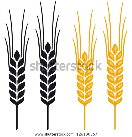 ears wheat barley rye vector visual stock vector 126130367 rh shutterstock com barley vector free download wheat barley vector