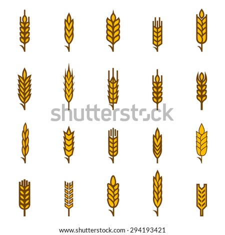 Ears of wheat bread symbols. Organic and bread, agriculture seed, plant and food, natural eat. Vector illustration - stock vector