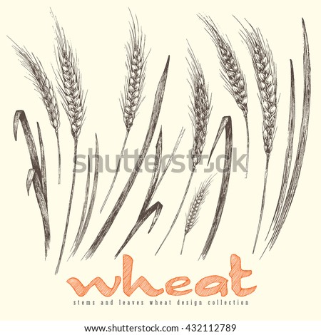 Ears of wheat elements collection, different ears of wheat with leaves, stems, isolated vector illustration for design of retro sketch style. - stock vector