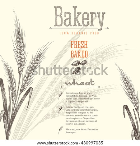 Ears of wheat isolated vector sketch hand drawn illustration, bakery shop background with ears of wheat, title and text layout. - stock vector