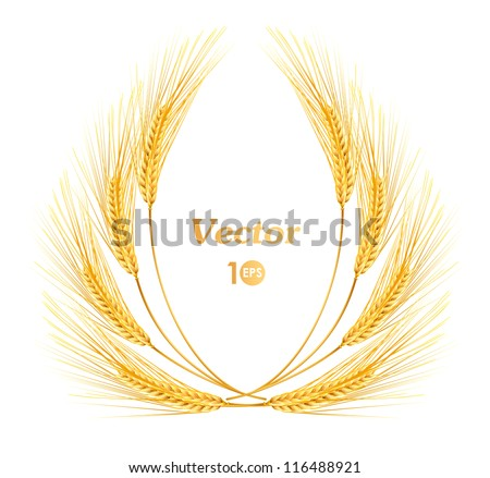 Ears of wheat. Vector eps 10. - stock vector