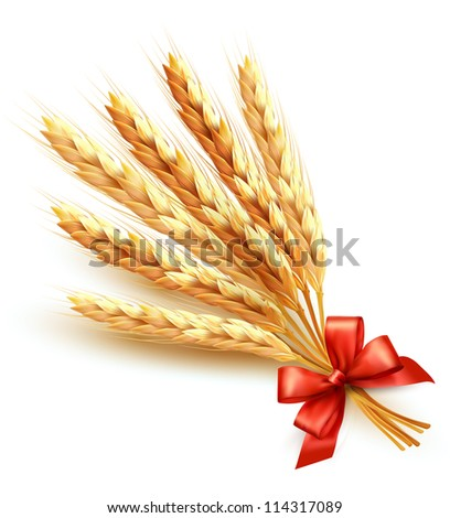 Ears of wheat with red bow. Vector illustration. - stock vector