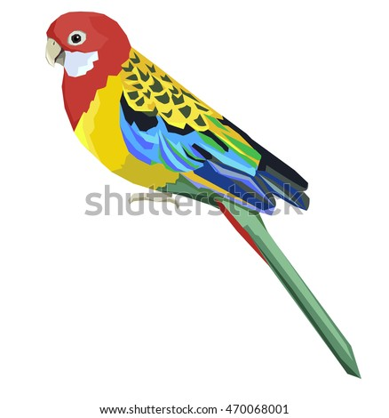 Eastern rosella vector illustration,  bird vector illustration, parrot
