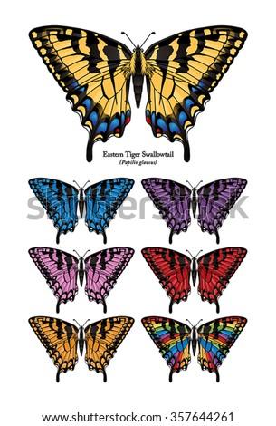 Eastern Tiger Swallowtail Buttefly Vector - stock vector