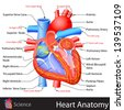 easy to edit vector illustration of anatomy of heart - stock photo