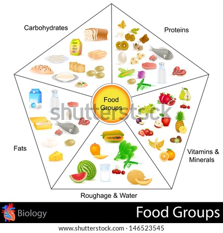easy to edit vector illustration of food group chart - stock vector
