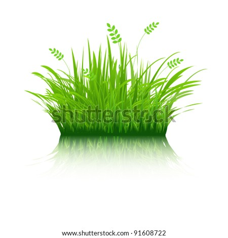 Eco Grass, Isolated On White Background, Vector Illustration - stock vector