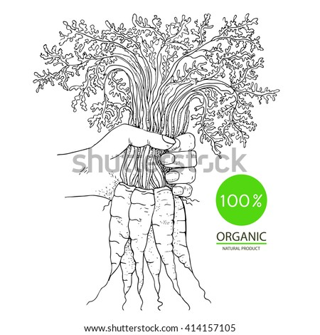 Eco shopping carrot with leaf  - stock vector