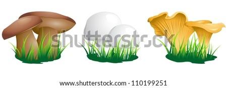 edible mushrooms - stock vector