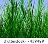 Editable vector design of tall rough grass - stock photo